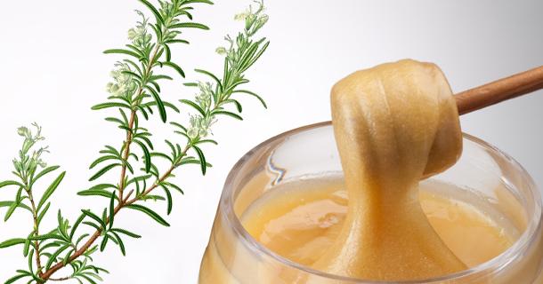 Que recèle comme bienfaits le miel de romarin de la garrigue ?